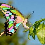 Бабочка талисман