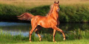 Огнегривый конь